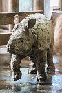 V plzeňské zoologické zahradě odstartovala hlavní sezóna. Na snímku nosorožec indický Růženka