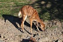 Posledním potomkem samce Mexe je nově narozená Priscilla.