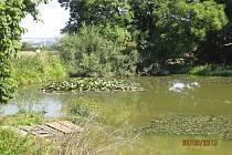 Rybníček u Kyšic.