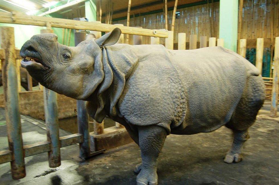 Nosorožec Baboo
