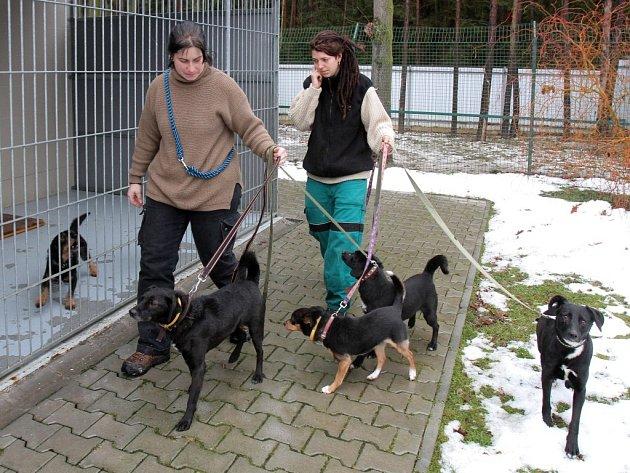 Na domov čeká vplzeňském útulku na Borských polích nyní rekordní počet psů, kapacita je převýšena odvacet chlupáčů