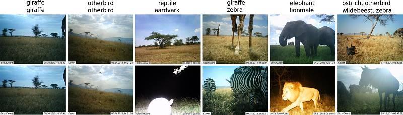 Obrázky z fotopastí v Národním parku Serengeti.