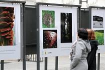 Expozice mapuje přírodní krásy Plzeňska