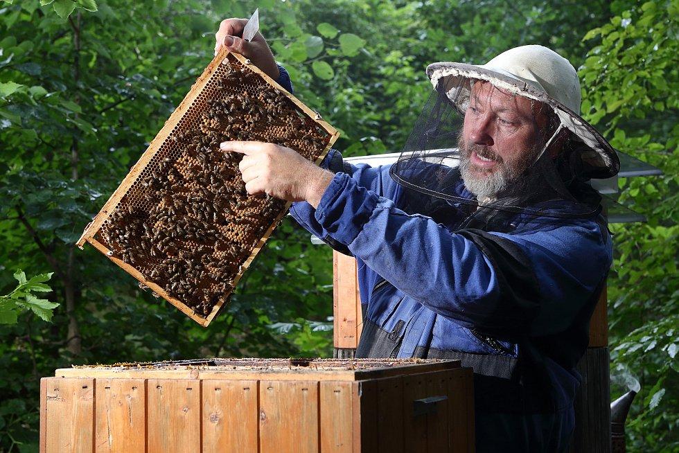 07 - Včely víčkují plod a vyzrálý med odlišným způsobem. Prázdné buňky včely vyčistí a připraví na další použití.