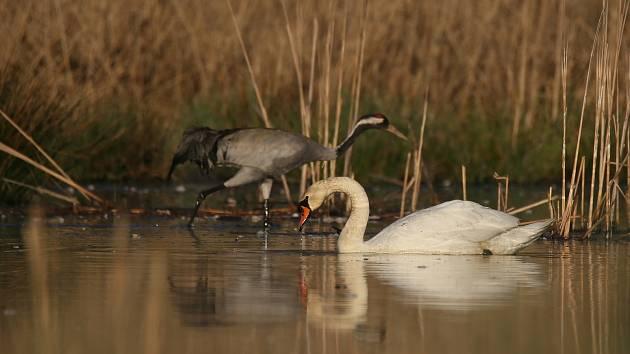 Mokřad má rozlohu 75 hektarů a poskytuje útočiště desítkám vzácných živočichů.