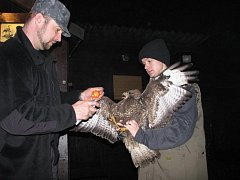 Silvestrovská služba na záchranné stanici živočichů v Plzni