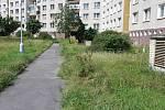 Neposekaný trávník ve vnitrobloku Brněnské ulice na sídlišti Vinice.