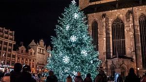Vánoční stromy v Plzeňském kraji