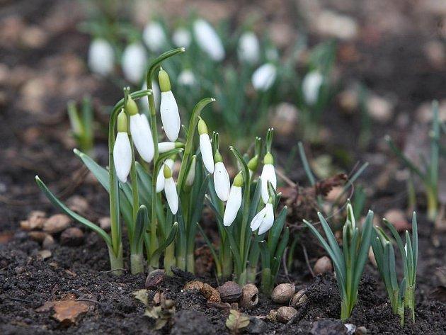 Jaro o sobě dává vědět, kvetou sněženky a cesty u řek lemují kočičky