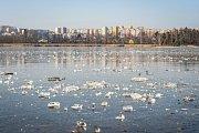 Zamrzlý Bolevecký rybník.