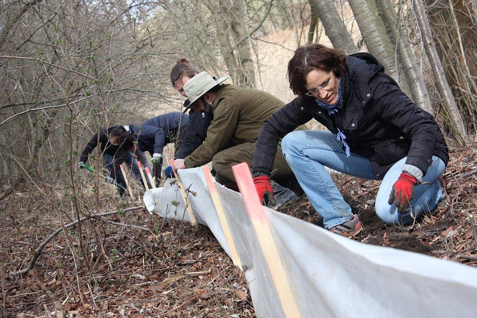I letos ochránci přírody budují zábrany, aby uchránili skokany, ropuchy a další obojživelníky před smrtí.