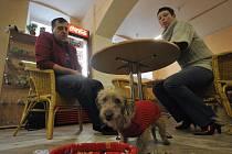 První psí kavárna je v Plzni v ulici Kardinála Berana. Otevřela ji před časem Blanka Schröpferová (vpravo)