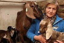 Božena Němcová, koza a letošní kůzlata