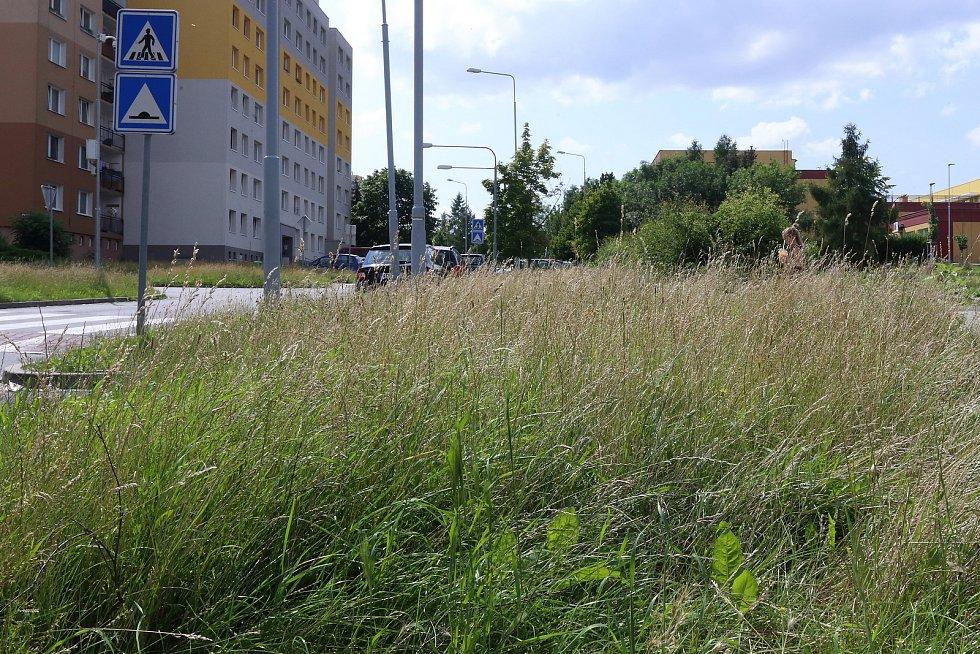 Neposekaný trávník u ZŠ v Brněnské ulici na sídlišti Vinice.