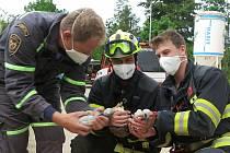 Z komína v Chotíkově zachránili tři hladová čapí mláďata.