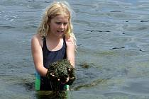 Zelená řasa trápí plavce i děti hrající si na břehu Velkého boleveckého rybníka