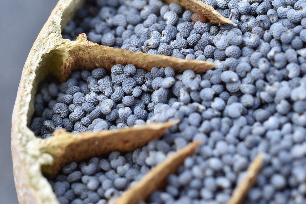Český modrý mák získal značku kvality Chráněné zeměpisné označení.
