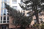 V Plzni v Kralovické ulici spadl strom na bytový dům