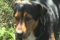 Pes nalezený u Skašova