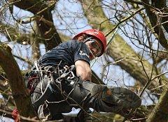 Stromolezec Václav Štojdl předvedl, jak se rychle a hbitě dá vylézt do koruny stromů