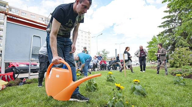 Sázení slunečnic na podporu nemocných s roztroušenou sklerózou