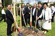 Japonská delegace v pondělí zasadila před plzeňským Peklem sakury věnované partnerským městem Takasaki