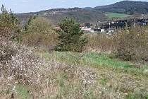 Pasoucí se zvířata se postarají o to, aby trnky, šípky atřina z vrchu nevytlačily vzácné teplomilné rostliny.