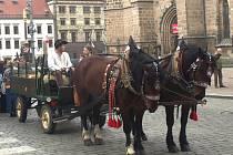 Kočí Matěj opět proveze děti koňským povozem centrem Plzně