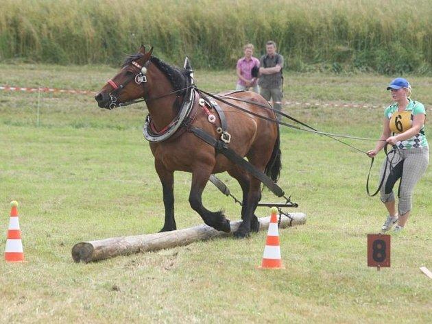 Závody koní na Formanském dni v Hunčicích.