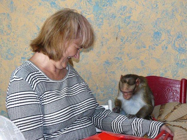 Přes rok neviděla Lenka Korandová svoji opičku Báru. Teď už je zase s ní