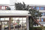 V Plzni padl strom na budovu ÚMO 1