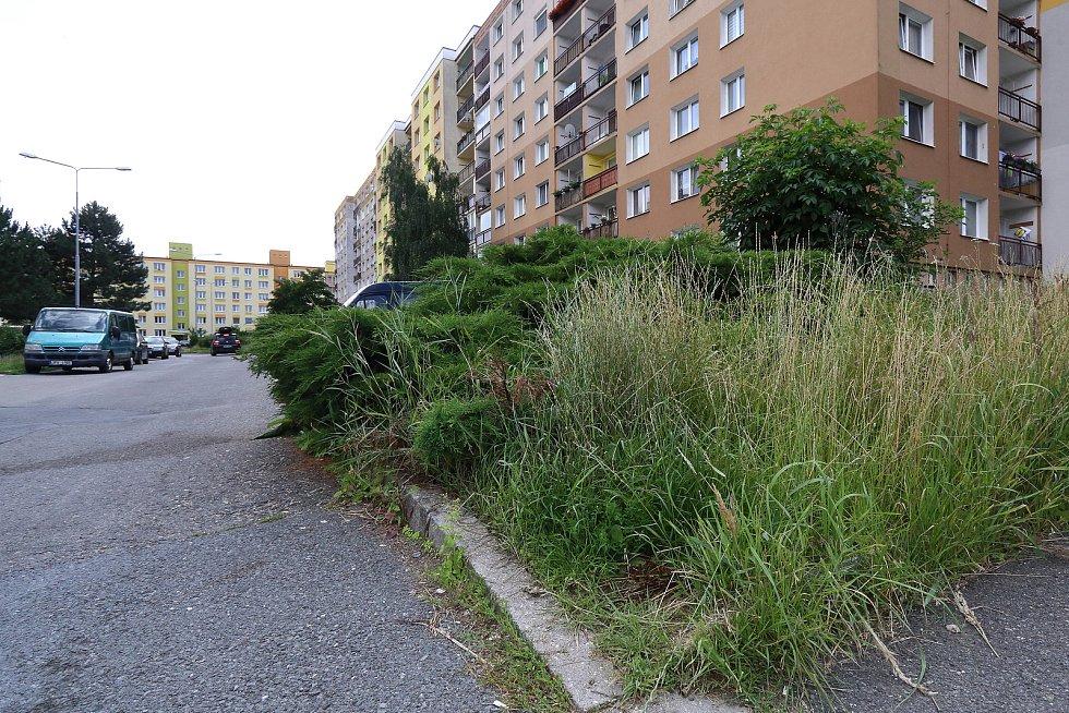 Neposekaný trávník ve Strážnické ulici na sídlišti Vinice.
