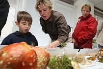 Celostátní výstava hub se koná ve dnech 10. a 11. října v prostorách Povodí Vltavy na Denisově nábřeží v Plzni.