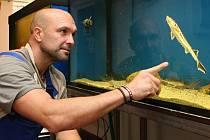 Ryby slouží ve vodárně jako doplněk přísné kontroly kvality vody