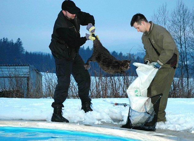 Záchrana bobra