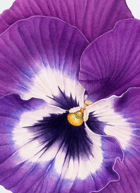 Zdíla botanické umělkyně Pavlíny Kourkové.