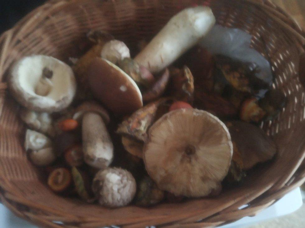 Čtenáři Deníku poslali fotografie nasbíraných hub.