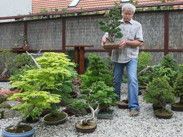 Merklín bude o víkendu plný bonsajů. Výstavu připravuje pořadatel Karel Vošahlík
