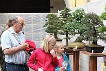 Výstava bonsají v Merklíně