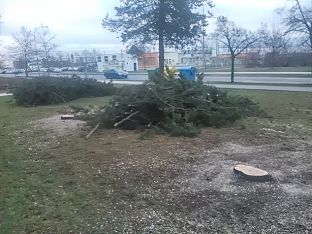 Po dvou vzrostlých smrcích zbyly  v  Heyrovského ulici jen pařezy