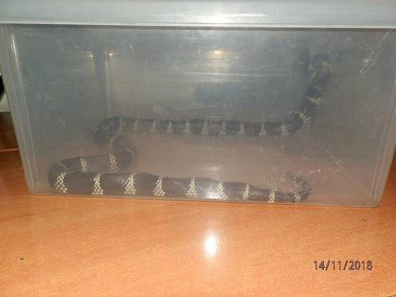 Hada nalezl zaměstnanec Českých drah na toaletě ve vlaku.