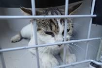 Nalezená zraněná kočka.