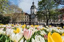 Tulipány kralovaly jarní Plzni, vystřídají je letničky.