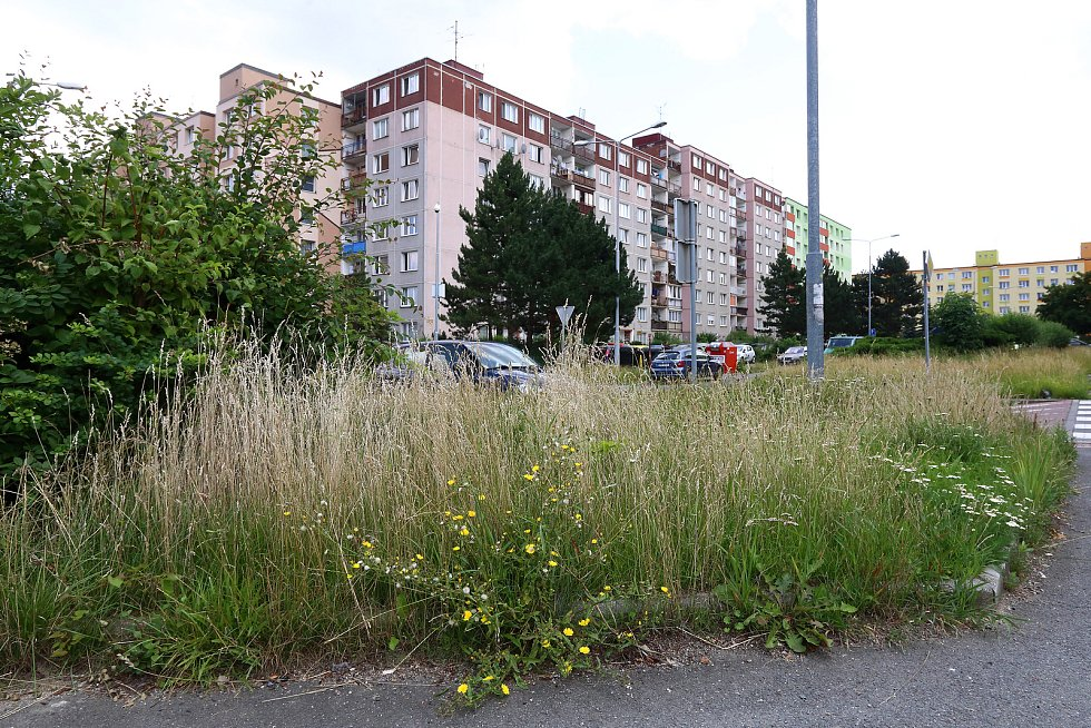 Neposekaný trávník v Brněnské ulici na sídlišti Vinice.