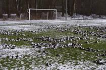 Zničené hřiště v Plzni-Liticích