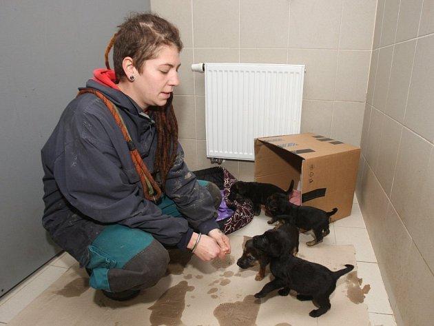 Malí nalezenci v plzeňském psím útulku