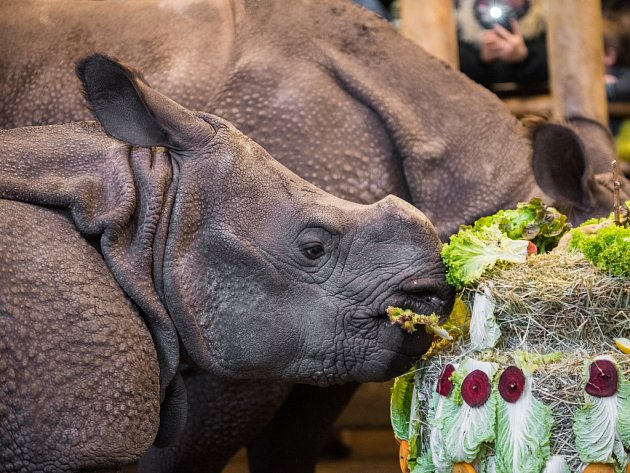 Maruška při oslavě druhých narozenin