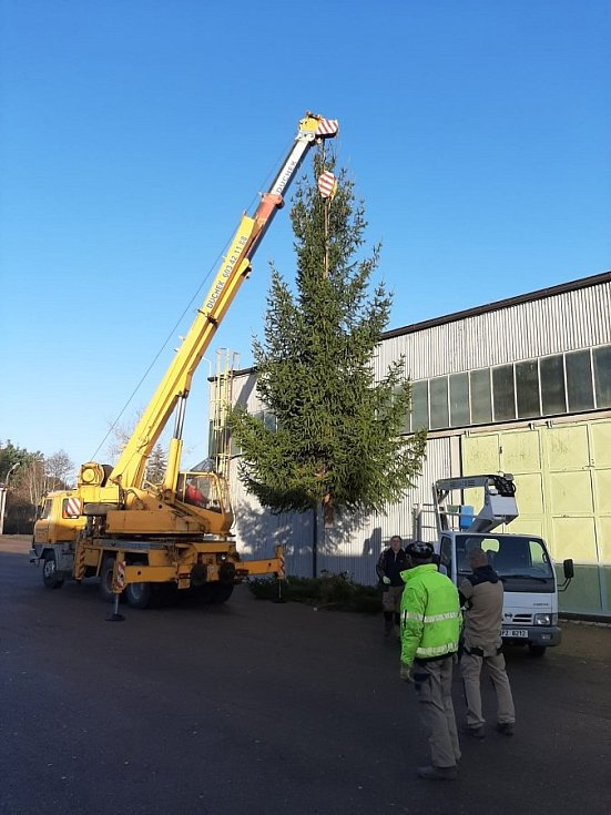 Vánoční strom v Nepomuku pochází z areálu Policie ČR, kde bránil využití prostoru