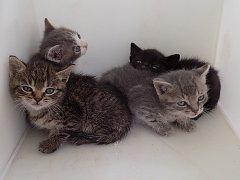 Koťata nalezená v krabici u popelnic