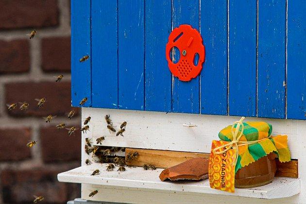 Město stočilo 17kilogramů medu zvlastních úlů.